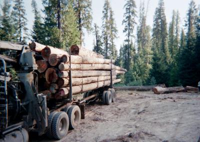 Cedar-Logs-Trucked