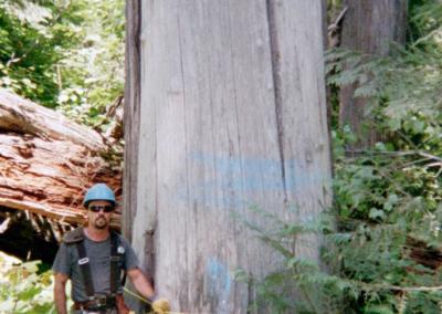 Dead-Cedar-Tree